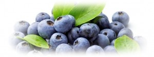 p_Bilberry Extract